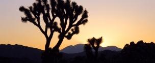 Sunset Libraryshot