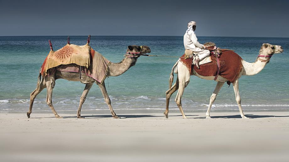 Ritz Carlton Dubai Camels