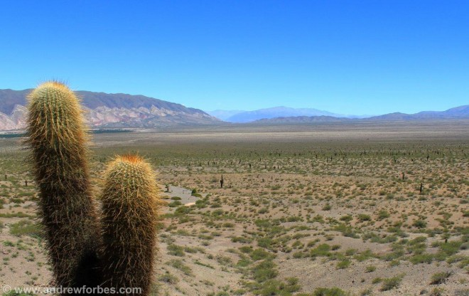 Vista of the cactus national park in Argentina