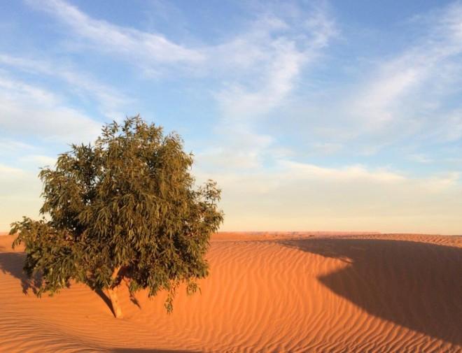DO - Desert adventures in Dunes of Merzouga