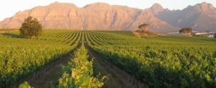 MAIN PIC Kleine Zalze Stellenbosch Mountain Vineyards